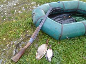 Вчера утречком сходил поохотиться на утку.  Расставил чучела, утка садилась к ним плохо, пришлось стрелять влет.