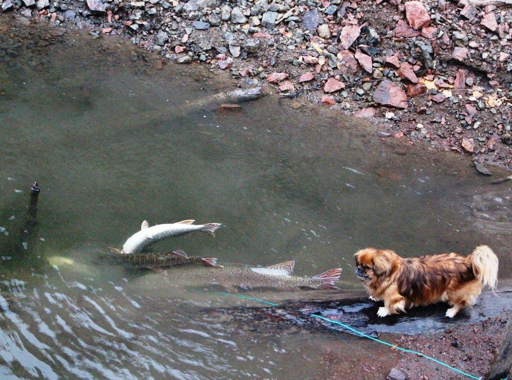 Рыбалка в Сибири