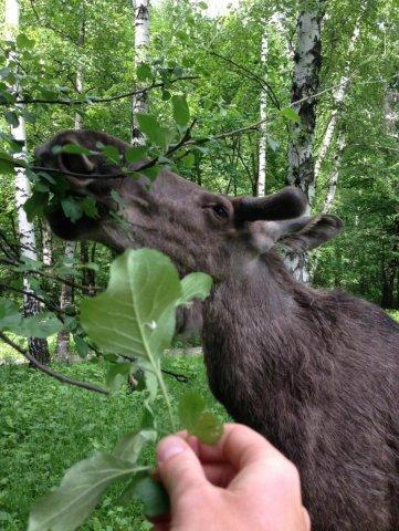 Дичь в естественной среде