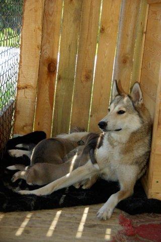 Чили и ее детки)))