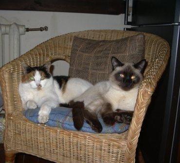 теплые коты!