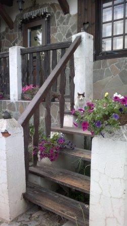 кошка Ирка - 14 лет а совсем еще молодая!