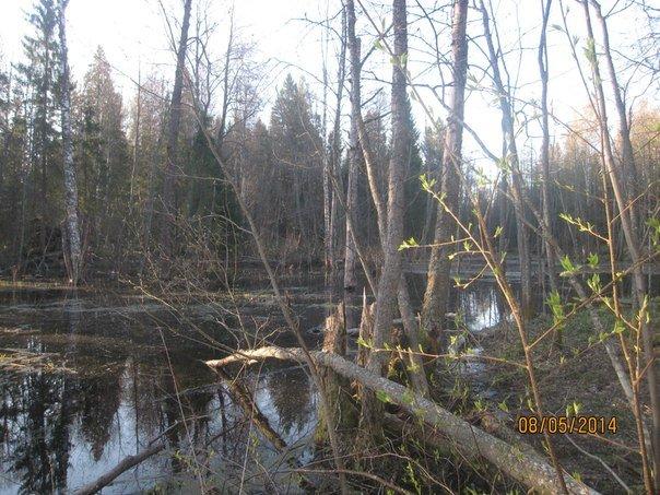 посреди леса