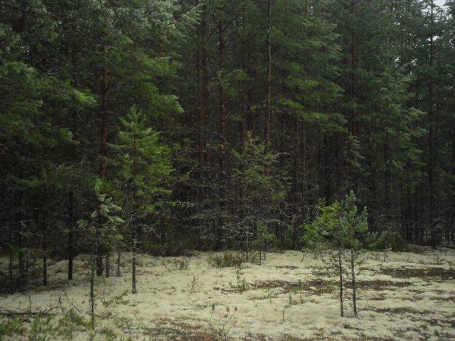 Карелия 2012 начало августа