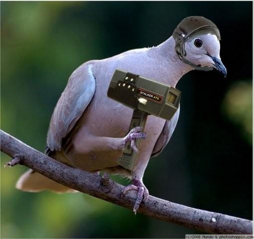 Новый радар детектор гусей