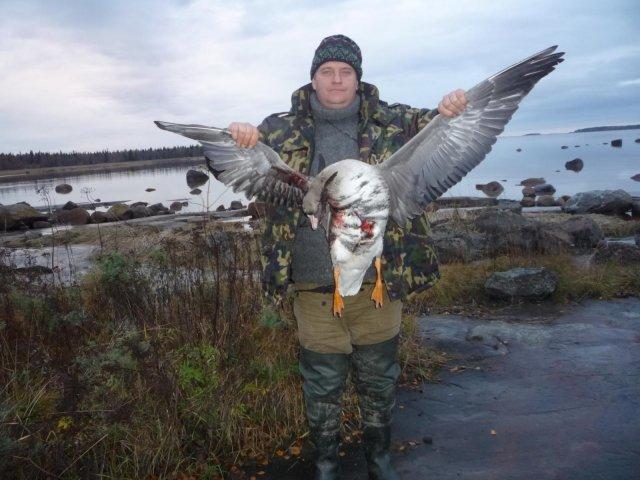 Охота на Белом море,гусь,утка