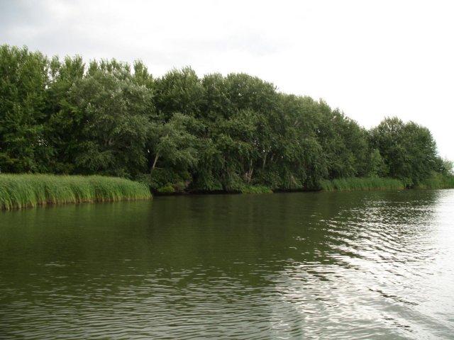 Остров № 2. Вид с реки Малый Иргиз