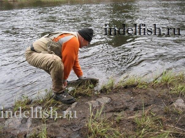 Лицензионный лов сёмги на Кольском