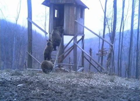 Медведи на вышке.jpg