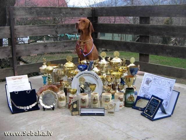 многократный полевой чемпион  Кобель ЧЕВАРБЕКИ ЧУЗЛИ один из прапрадедов.jpg