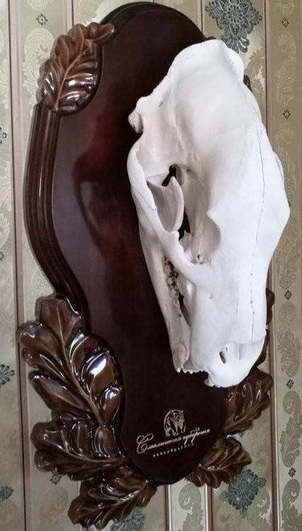 Медальон под череп медведя резнй.jpg