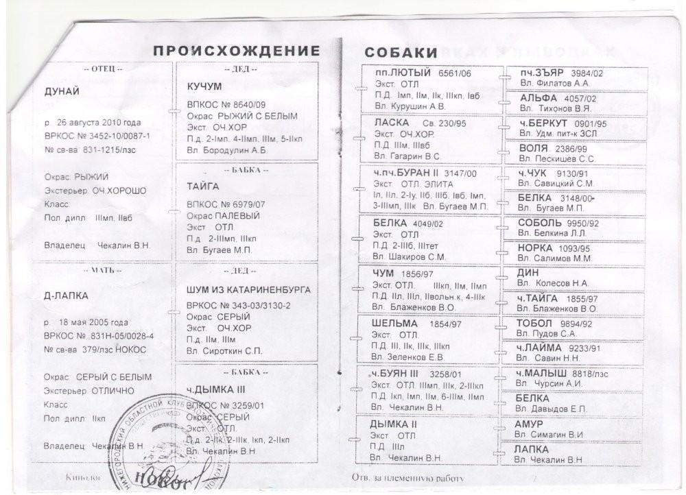 паспорт Дина л1.jpg