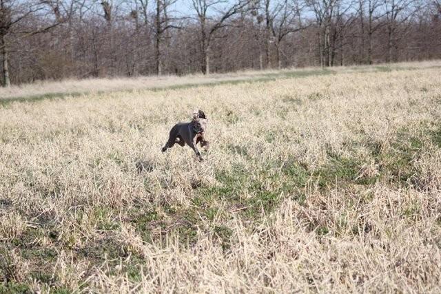 Zephyr Stalking Wildfowl (Markus)
