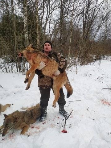Охота на волков в Ярославской области