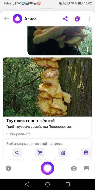 Screenshot_20200530_160228_com.yandex.browser.jpg