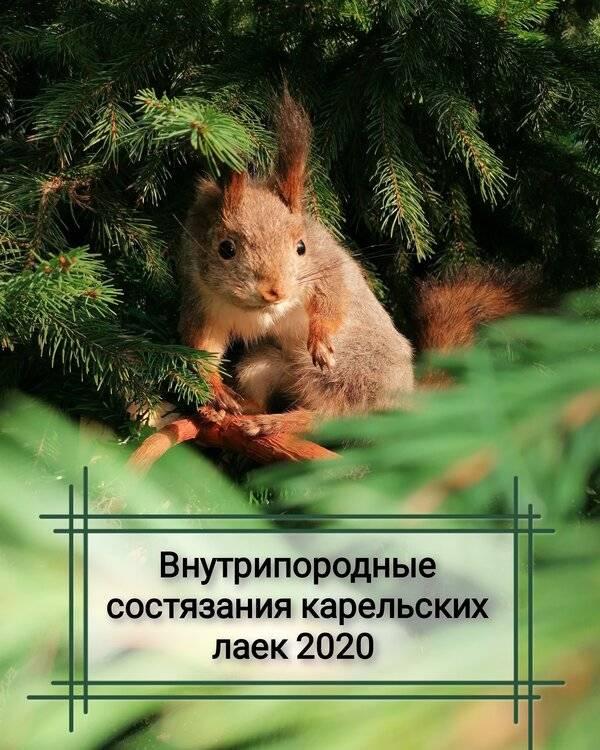 IMG_20201024_221359_057.thumb.jpg.76f2b57cb066cbe9710083309adedcde.jpg
