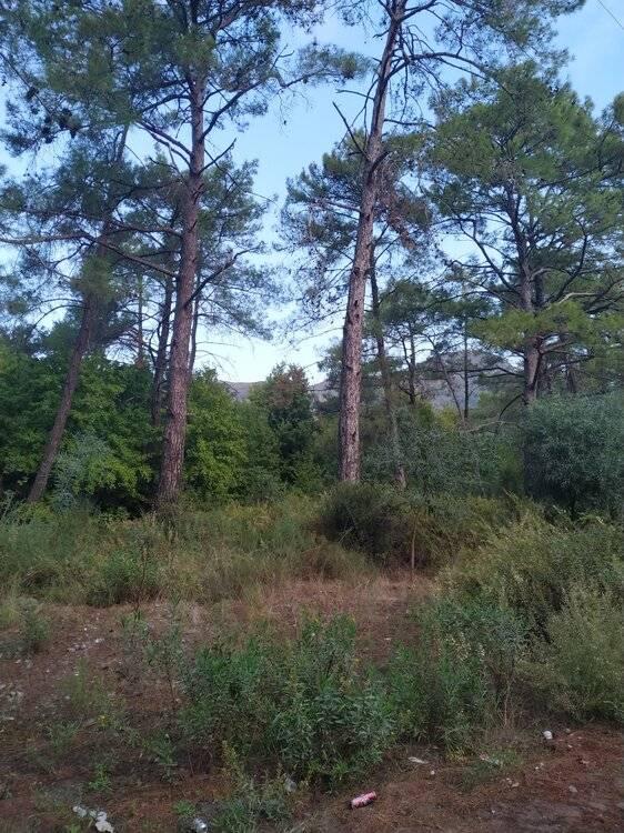 лес на берегу.jpg